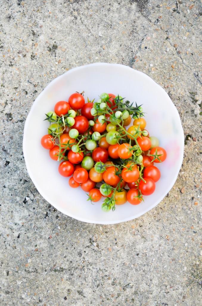 recolte tomate verte rouge cerise tomatato arcopal