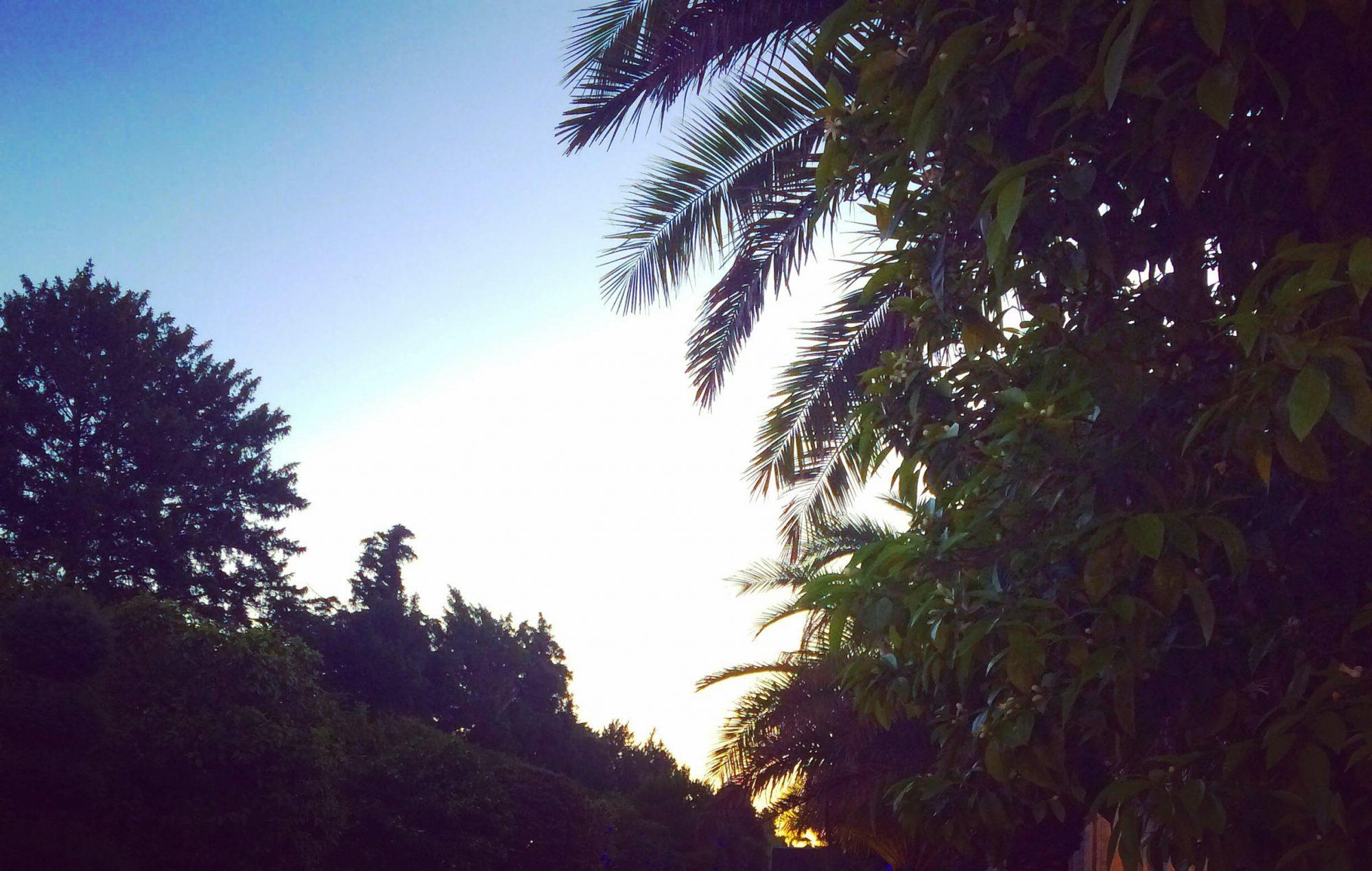 bal masque versailles 2016 orangerie palmiers matin